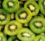 General Alvarado declarado zona de baja prevalencia de mosca de los frutos: Destacan avance para comercialización de kiwi