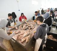 La Costa: La Terminal Pesquera prepara su primera exportación a Francia