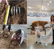 Monte Hermoso: Una familia de turistas encontró restos fósiles de entre 10.000 y 25.000 años