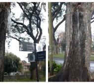 El árbol está en la esquina de E. Costa y Guido y Spano.