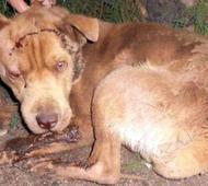 Uno de los perros atacados.