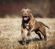 """Polémica por """"perros peligrosos"""""""