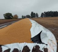 Sobre llovido, mojado: Vandalizaron y rompieron un silobolsa con trigo en Baigorrita