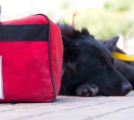 Atención gratis para mascotas en El Palomar.
