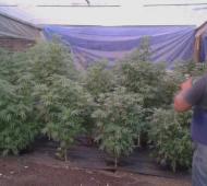 Hallaron 215 plantas de cannabis en un vivero de Baradero. Foto: LaNoticia1