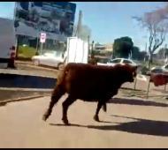 La mujer vestida de rojo fue embestida por el toro.