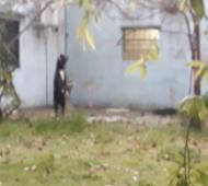 Berazategui: Ató y colgó a un perro hasta morir